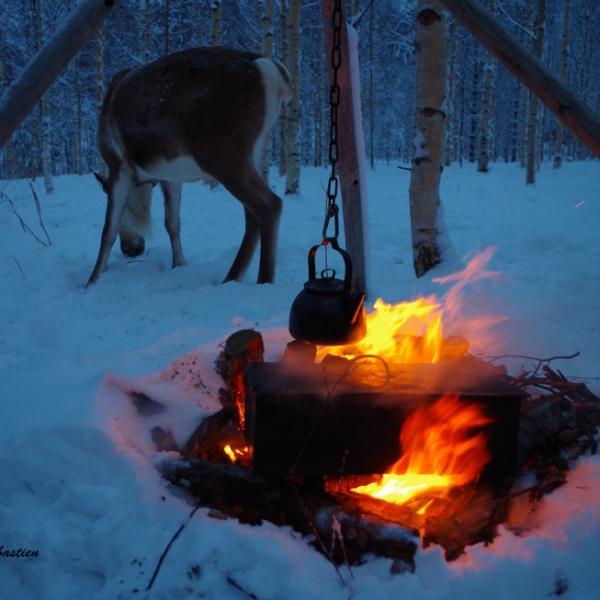 Fumoir et renne